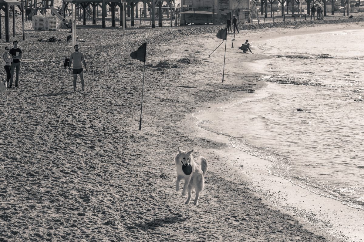 a dog catching a frisbie on the beach