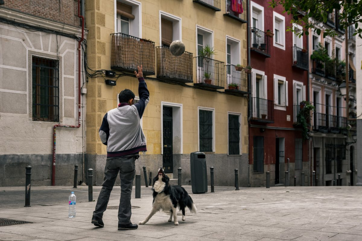 A man playing ball with a border collie at a small square in one of Madrid's neighborhoods