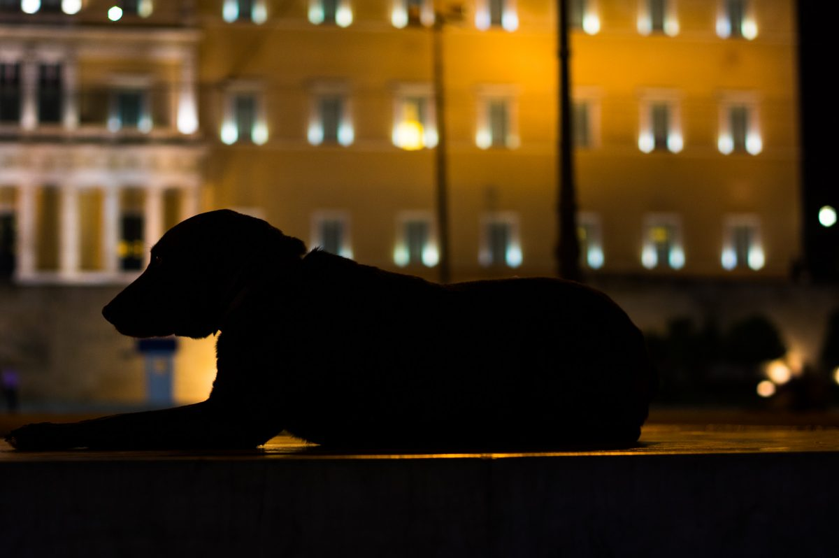The dark figure of a stray dog against the lighten greek parliament