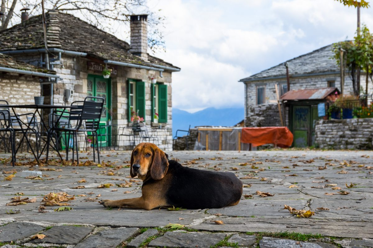 A dog laying on an empty village square in Zagori, Greece