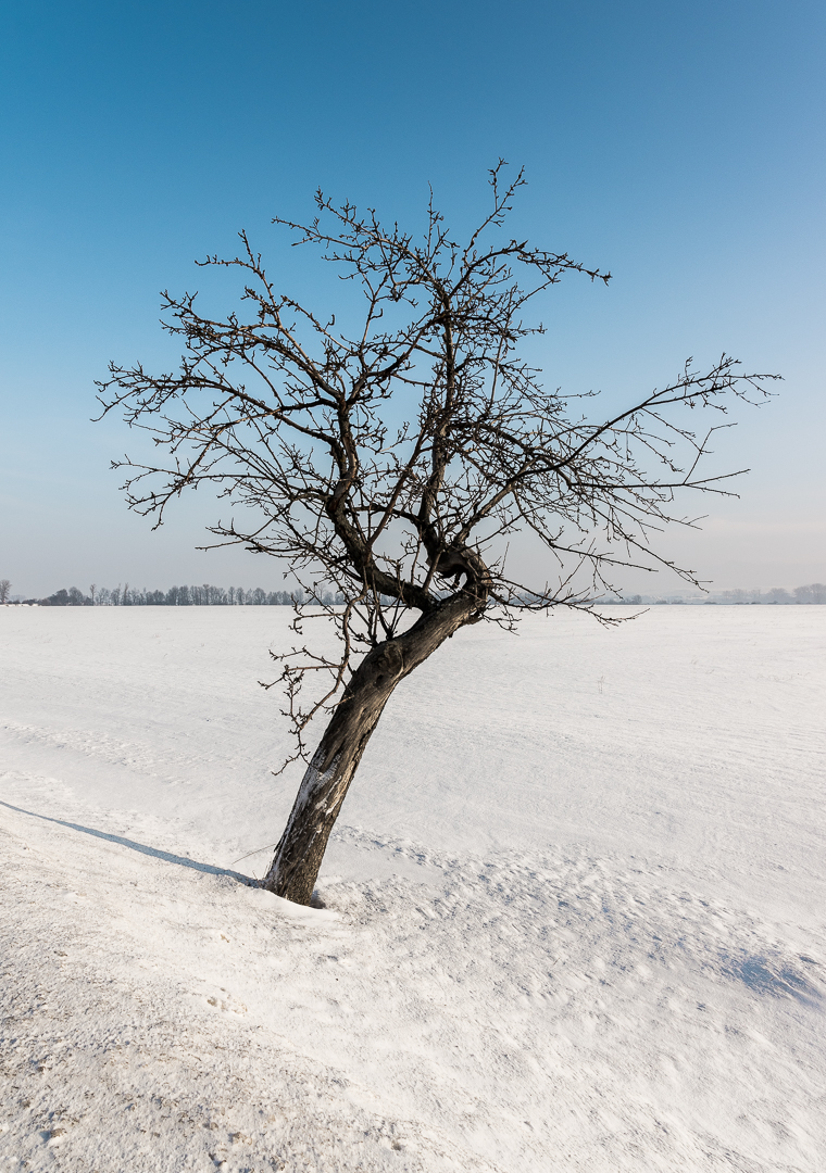 a landscape with a tree in the middle and split by the white ground and the blue sky